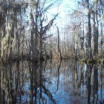 Louisiana: staat van cajun, bayou en voodoo