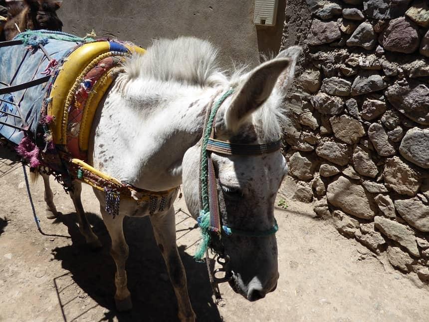 Mocht je de tocht naar boven in de bergen zwaar vinden, dan kan je in een dorpje altijd een ezel regelen