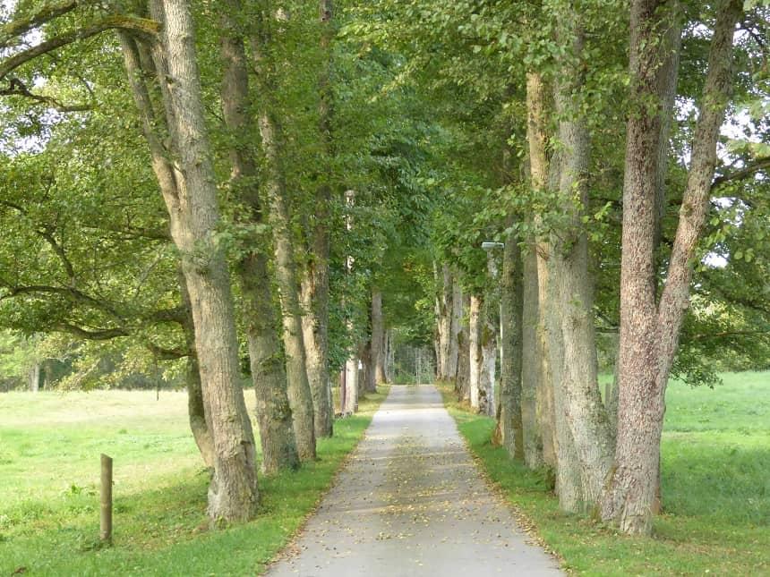 Het pad is uitermate geschikt om heerlijke fietstochten te maken, voor jong en oud!