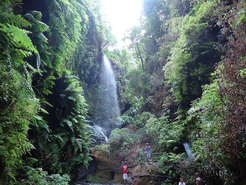 Los Tilos, het grootste laurierbos van het eiland