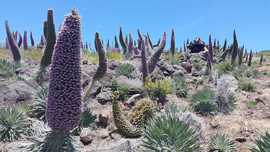 Emigreren naar La Palma