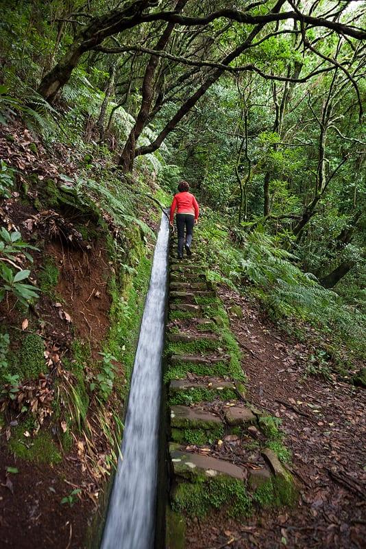 Berggids Dolores, Levada do Moinho, Madeira, Portugal