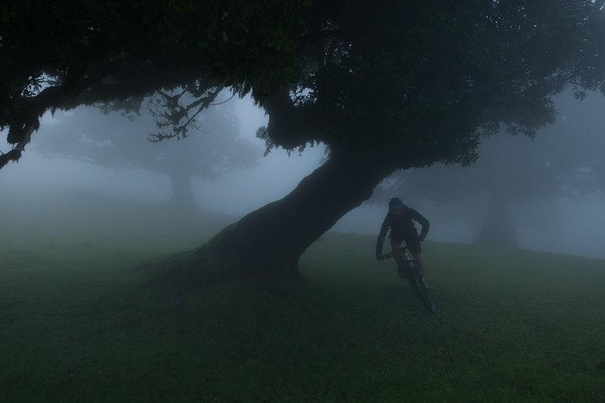 Mountainbiken in de Mist, Fanal gebied, Madeira, Portugal