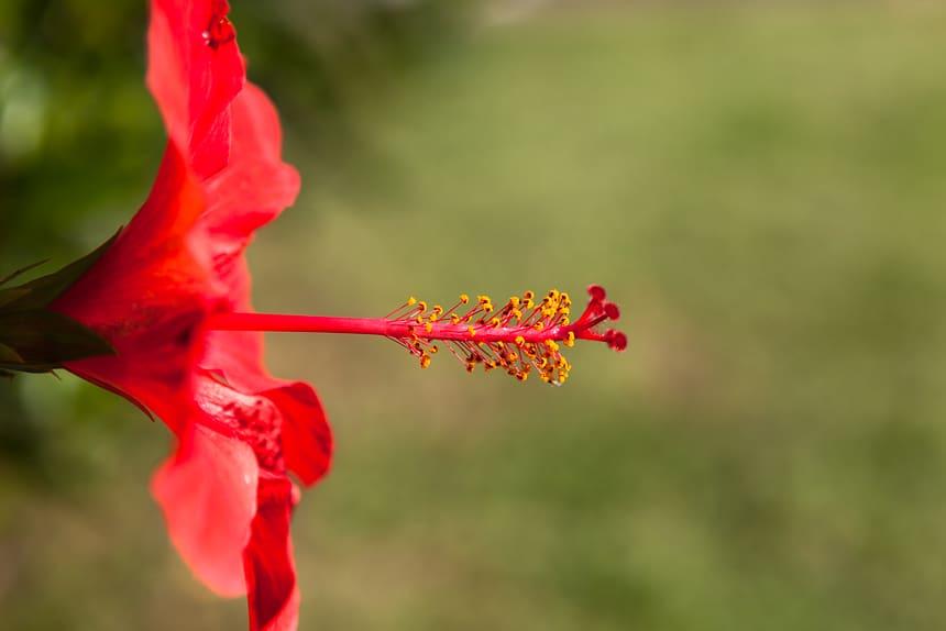Madeira, bloemeneiland, Portugal