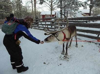 Rendieren voeren bij Rovaniemi Brigitte de Graaff