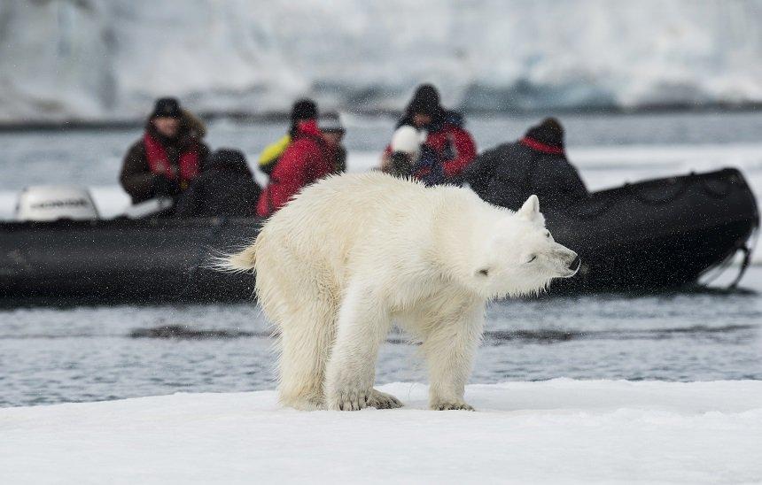 Vanaf het water heb je de meeste kans ijsberen te zien.