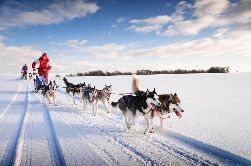 Racen door het landschap op een hondenslee in Yukon