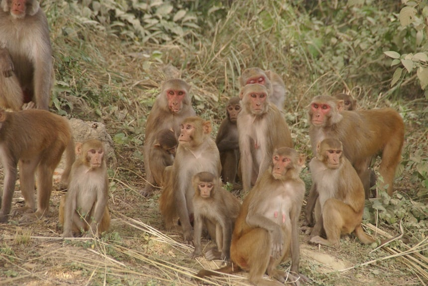 Aapjes berm India
