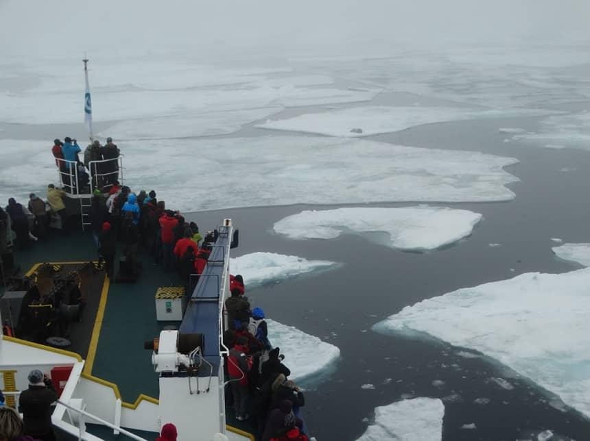 Baardrob Spitsbergen
