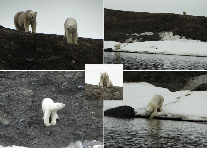 Moeder en dochter ijsbeer