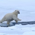 Vogels spotten op Spitsbergen