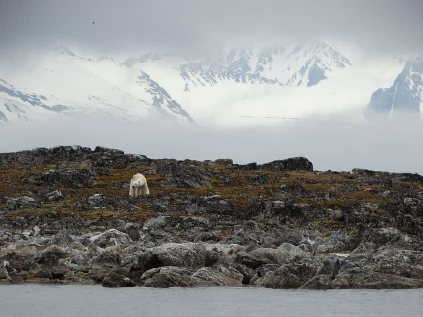 ijsbeer spitsbergen