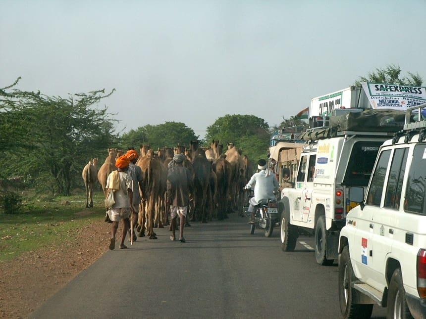 Kamelen India