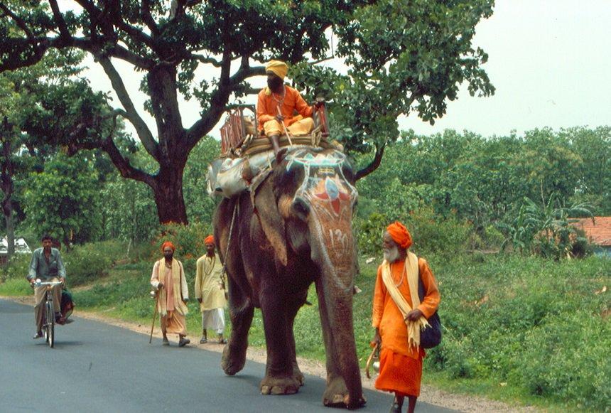 Sadhu olifant India