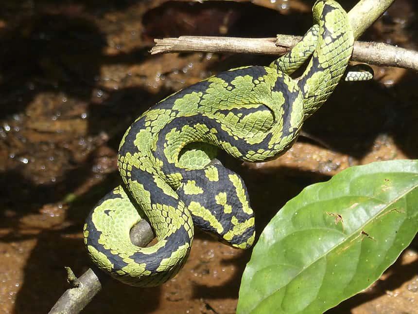 Slang Sinharaja Forest Reserve