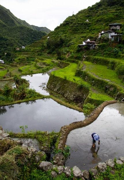 Het 8e wereldwonder, noemt men de Banaue-rijsterassen op Noord-Luzon (Filippijnen). Als heuse amfitheaters strekken ze zich uit over het landschap