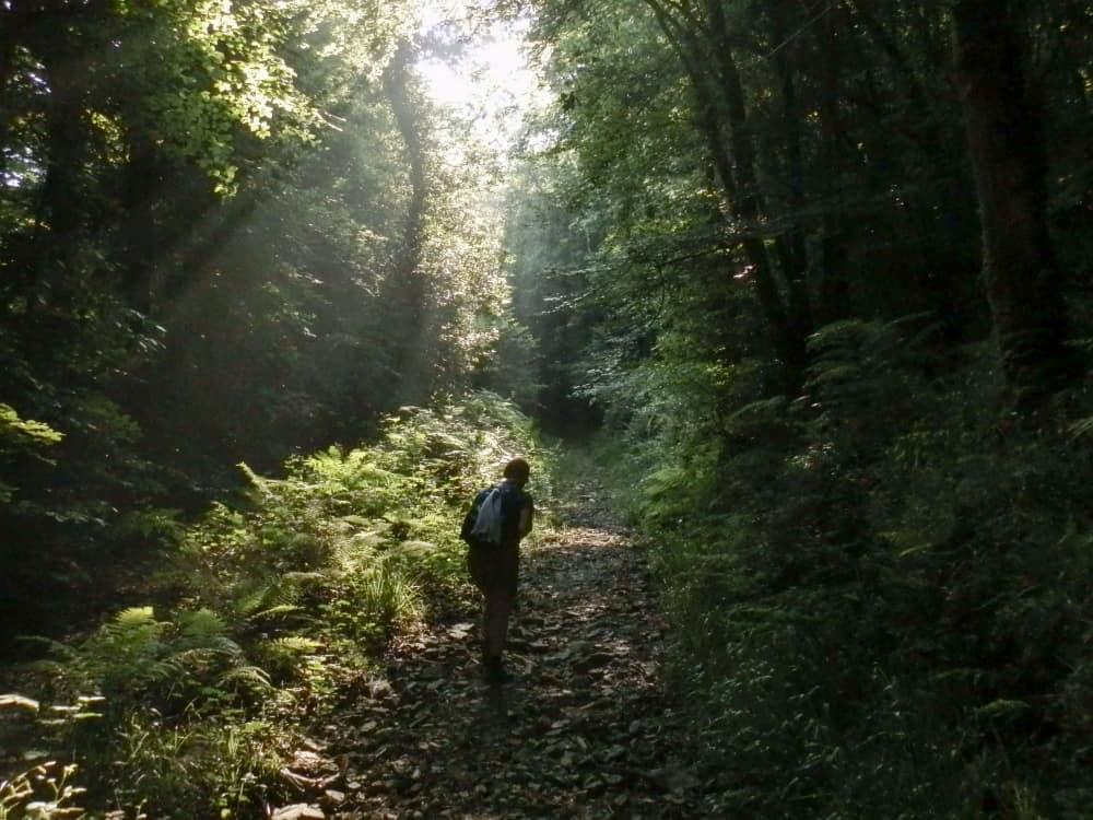 Vanaf de kust loop je via een strook bosgebied het schiereiland op...