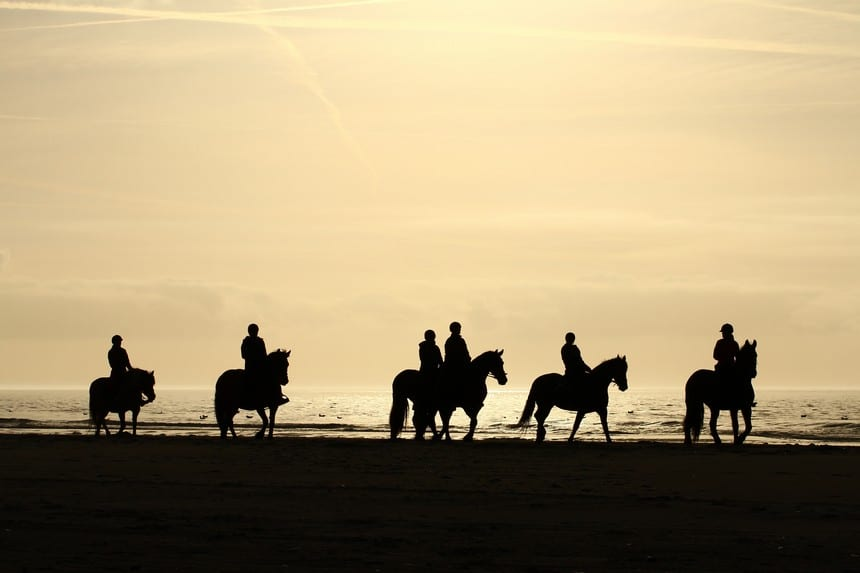 paarden op ameland