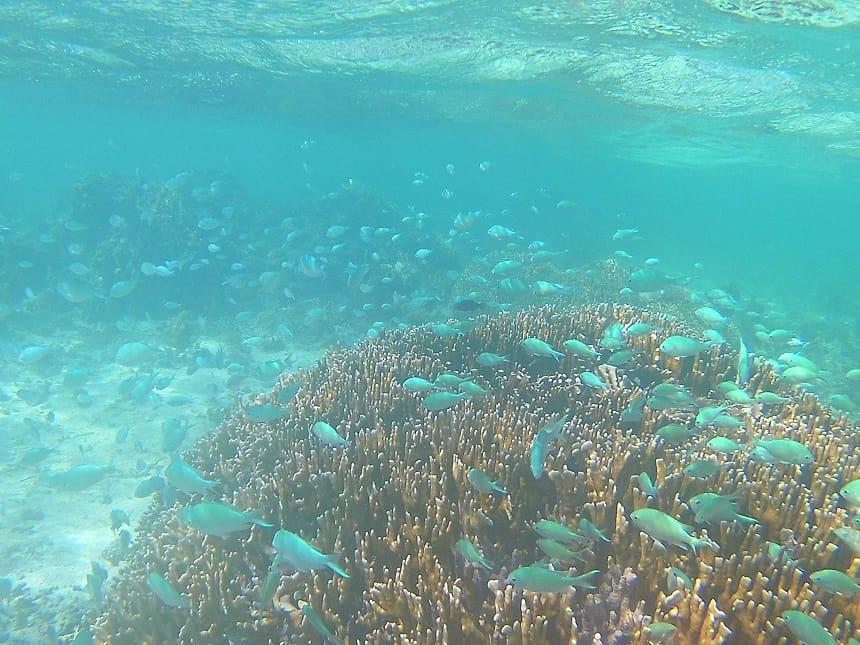 Koraalriffen op Mauritius