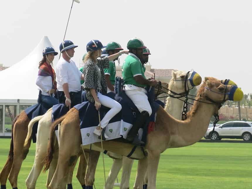 Kamelenpolo Reishonger Dubai