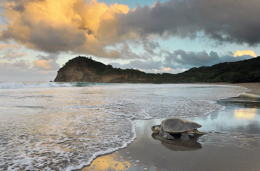 Wildlife Reserve La Flor Nicaragua