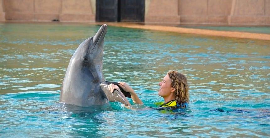 Dubai Reishonger Dolphin