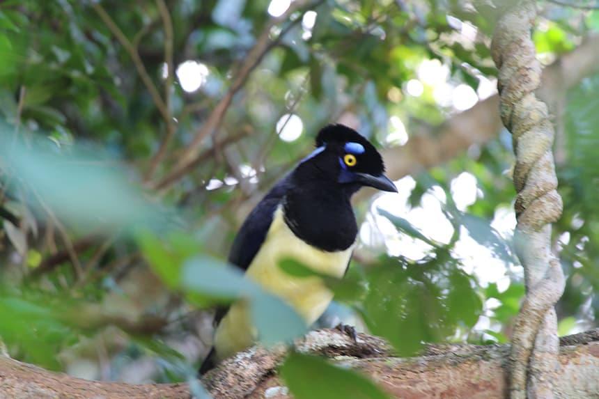 vogels Foz do Iguaçu