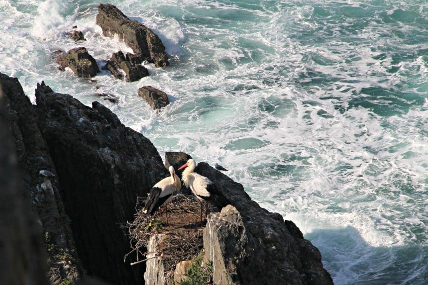 Ooievaars zijn in Portugal beschermd
