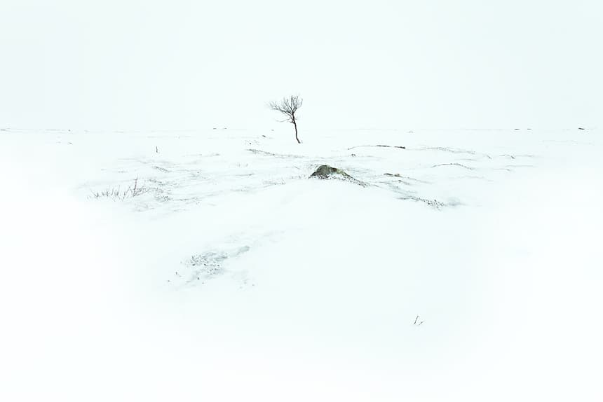 Boompje, Nuorgam Toendra, Lapland, Finland