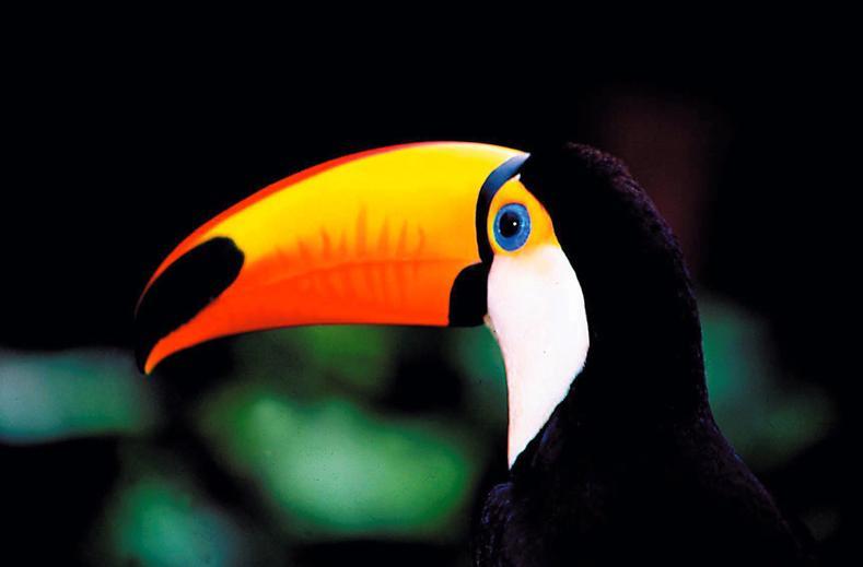 Highlights of Costa Rica
