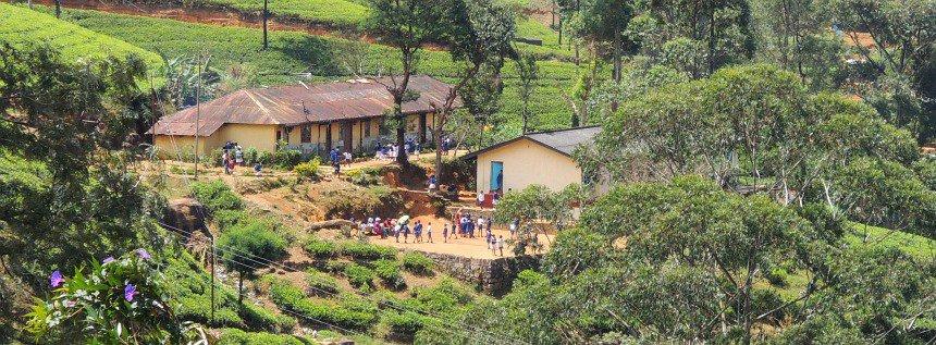 Ook in de heuvels bij de thee-plantages zijn scholen.