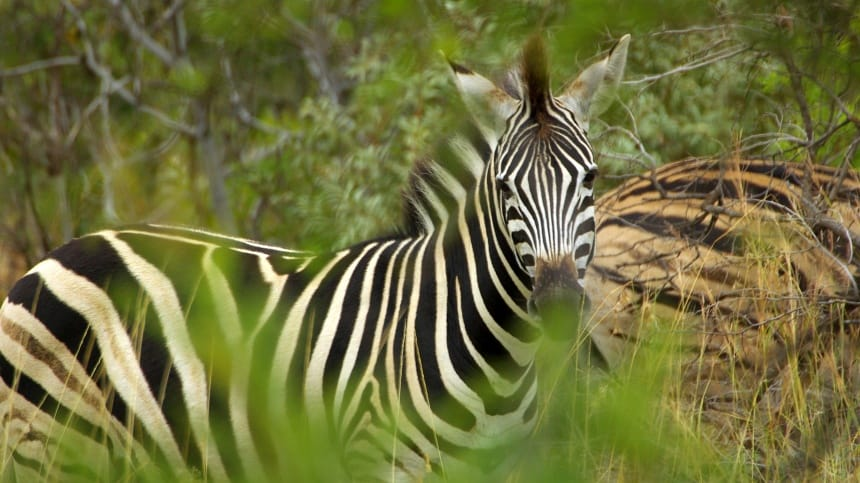 Een tocht door het Krugerpark is een sprookje.
