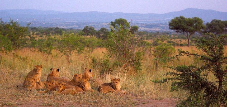 Ga in een wildpark vooral met een ranger op pad. Groot kans dat je bij zonsopkomst mooie foto's schiet.