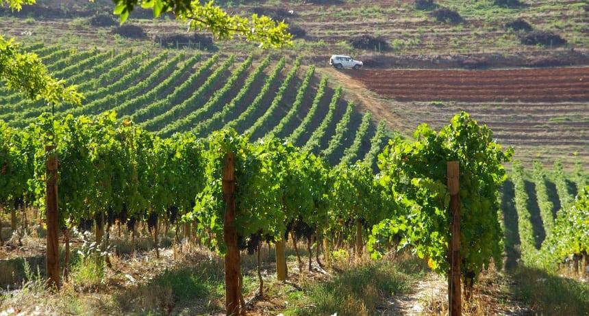 De mooiste wijnboerderijen vind je vooral rond Kaapstad, zoals hier bij Stellenbosch.