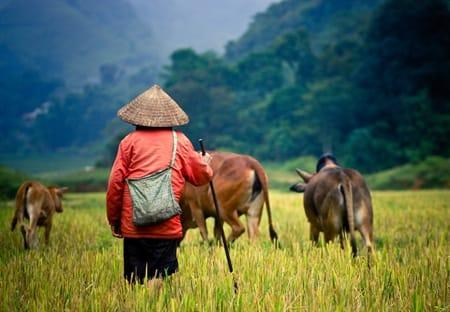 vietnam fox reizen
