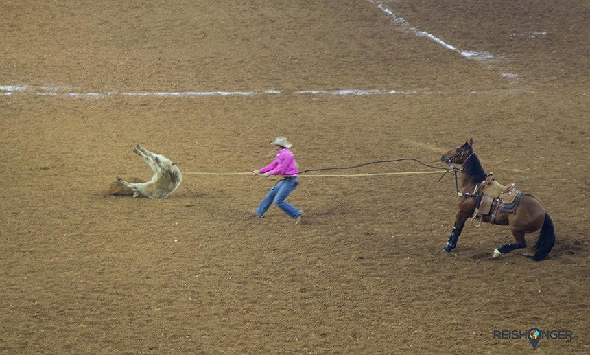 Steer roping Texas