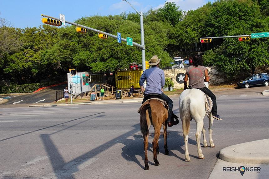 Paard in Texas