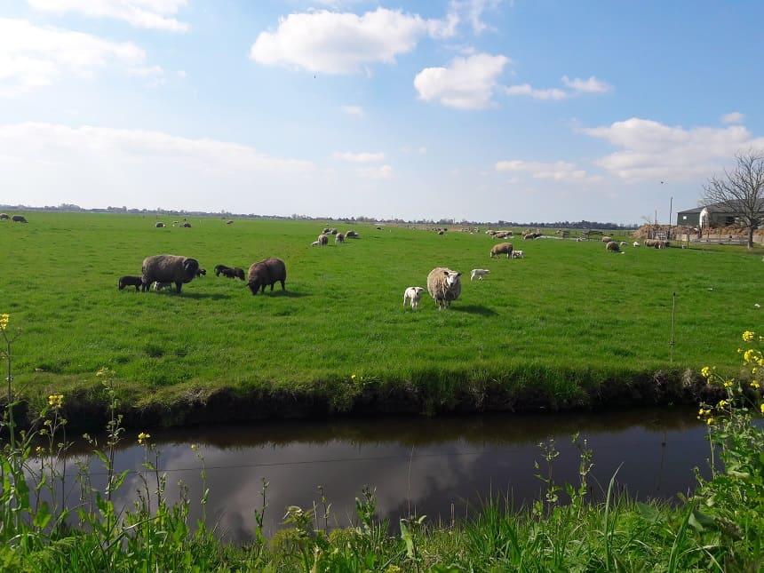 Nederland met de boot Laag Holland