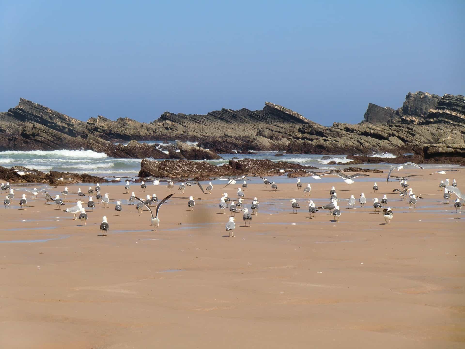 Alentejo stranden