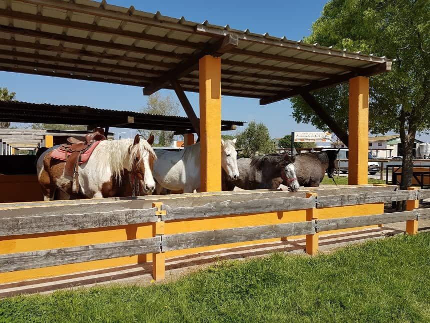 paardrijden camargue