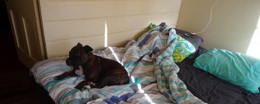 Hondje bij couchsurfhost