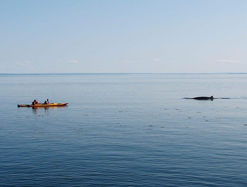 Walvissen spotten in Tadoussac