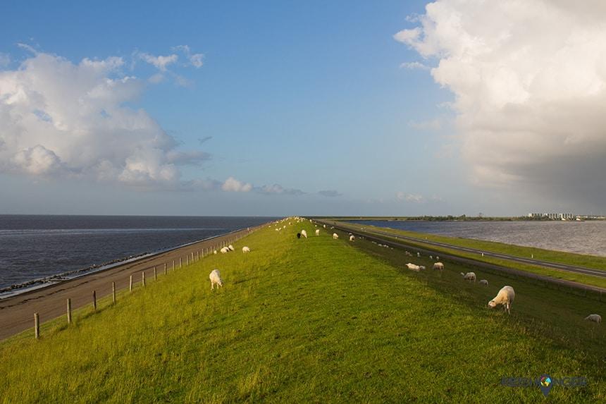 Landal Esonstad - een kudde schapen begraast de dijk