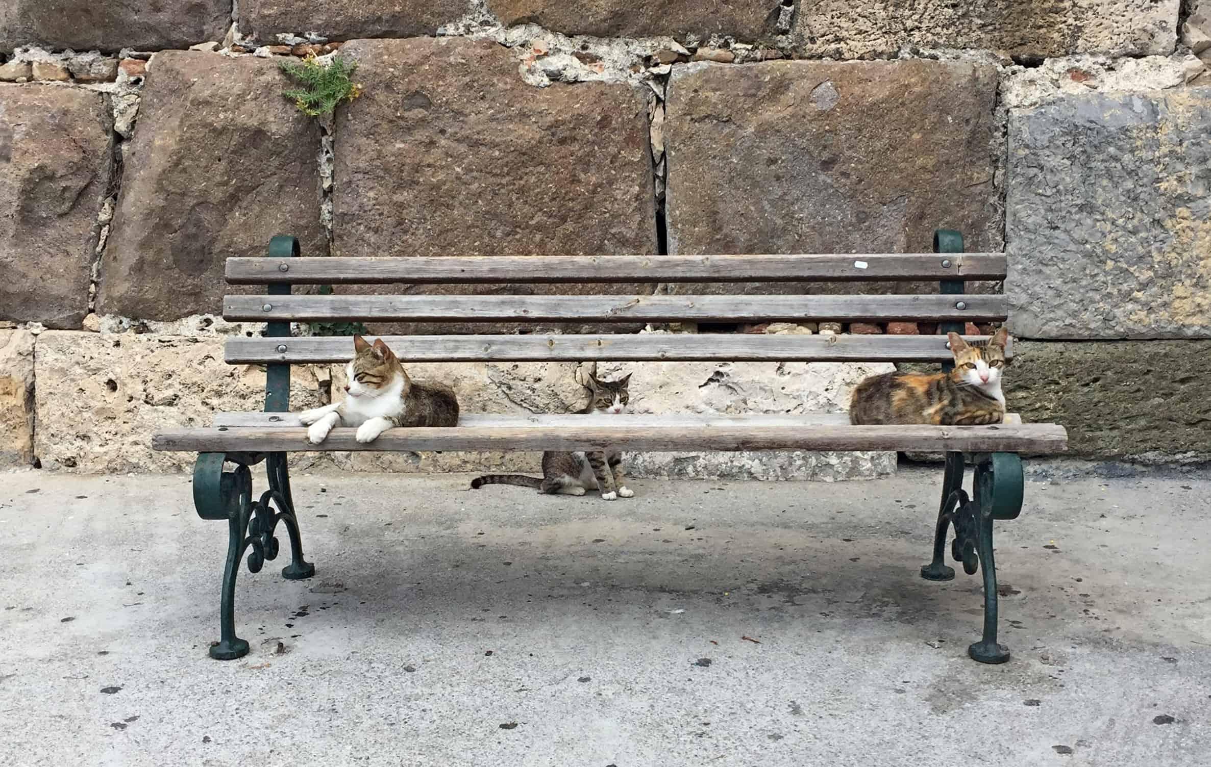 Katten op Kos, Griekenland