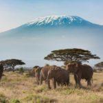 Kilimanjaro beklimmen? Deze route is het meest geschikt voor beginners