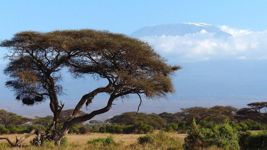 Lemosho route op de Kilimanjaro