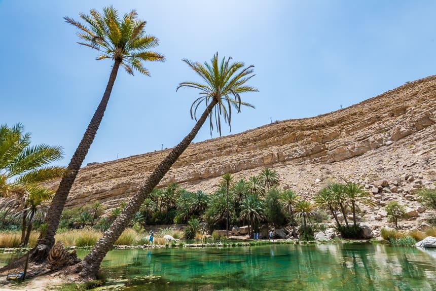Palmen in de Wadi Bani Khalid oase in de Sharqiyah woestijn