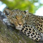 Malawi maakt werk van wildmigratie