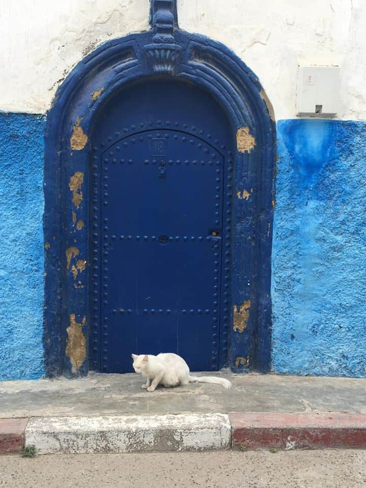 Twee typische dingen in Rabat op één foto: katten en blauwe deuren