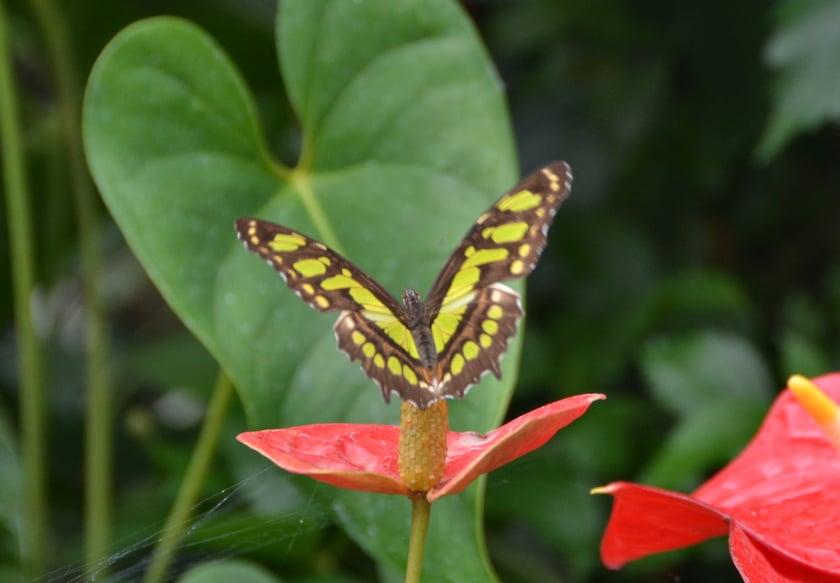 Vlindertuin Beleveniswereld Emsflower